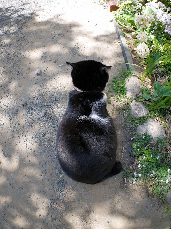 木漏れ日と黒白猫の背中2