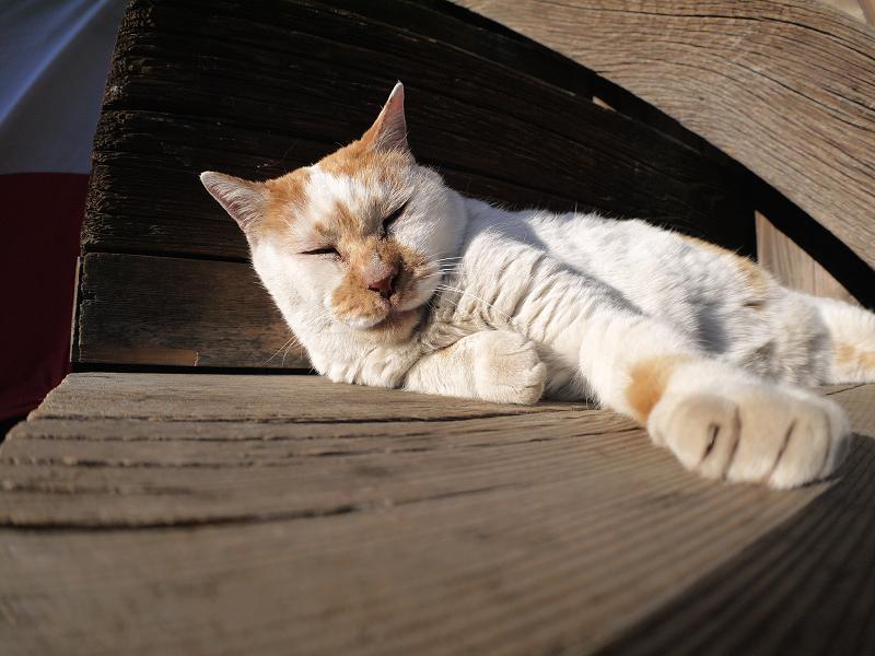 階段の端で寝てしまう白茶猫1