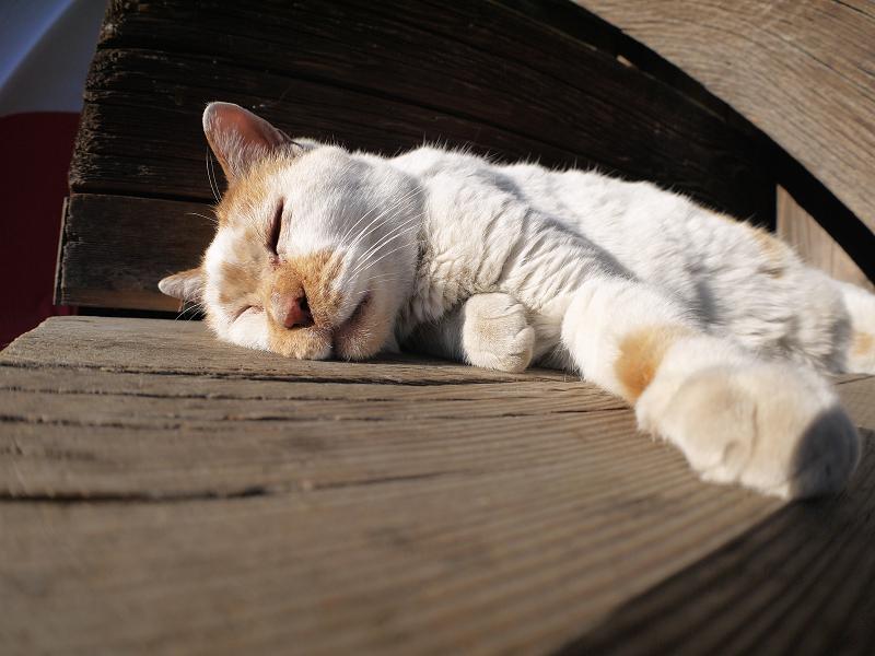 階段の端で寝てしまう白茶猫2