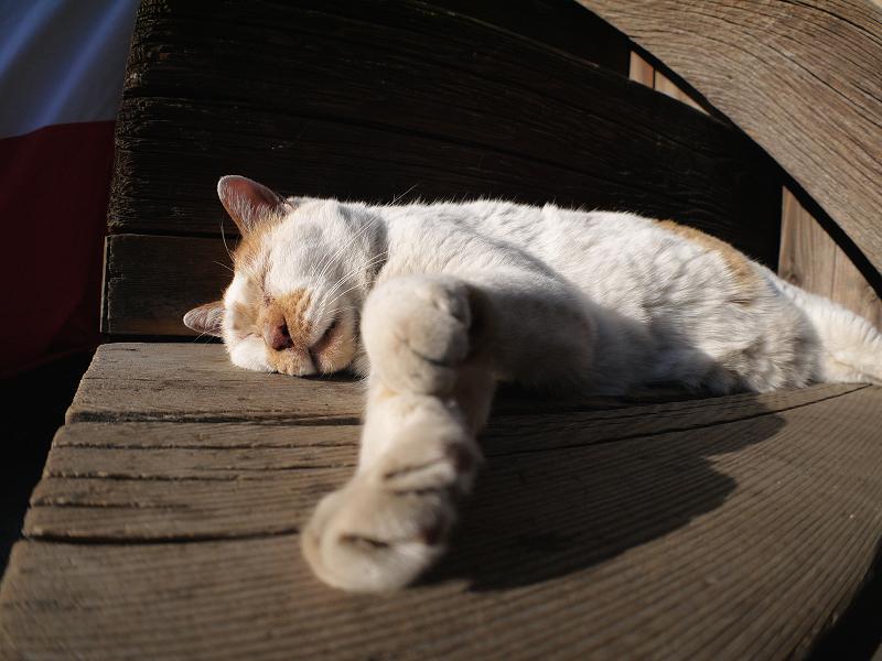 階段の端で寝てしまう白茶猫3