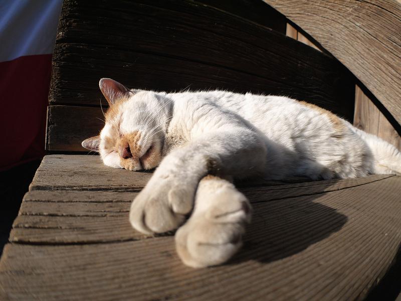 階段の端で寝てしまう白茶猫4