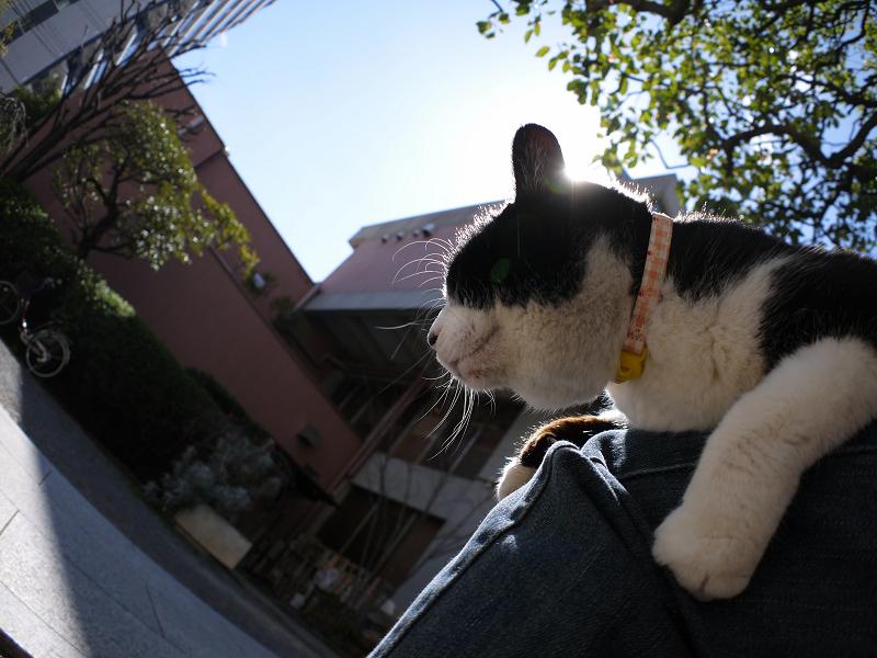 青空と膝に乗った黒白猫1