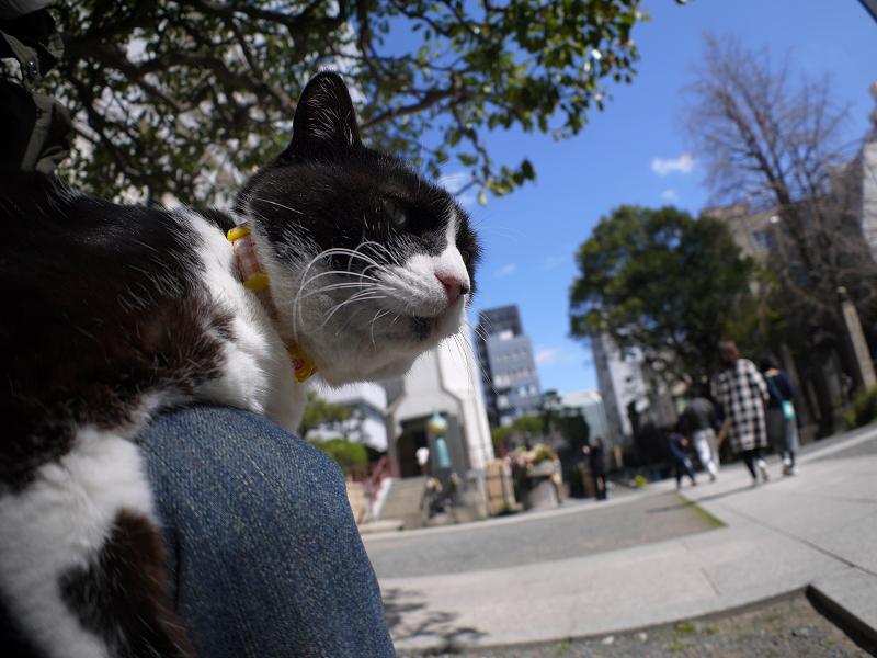 青空と膝に乗った黒白猫2