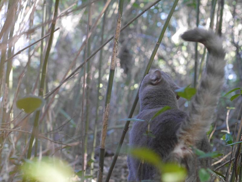 不思議な草むらとグレー猫2