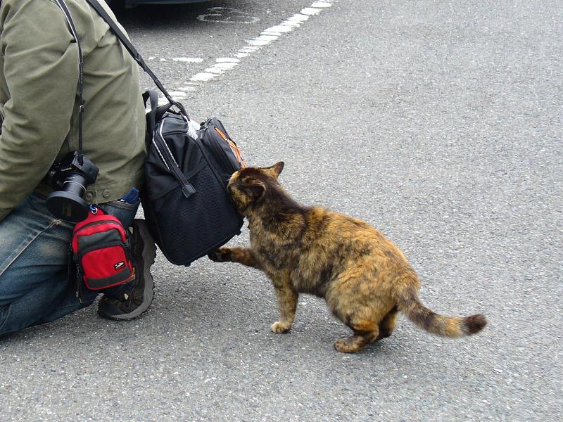 バッグが気になるサビ柄猫1