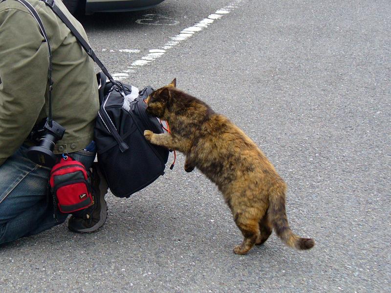 バッグが気になるサビ柄猫2