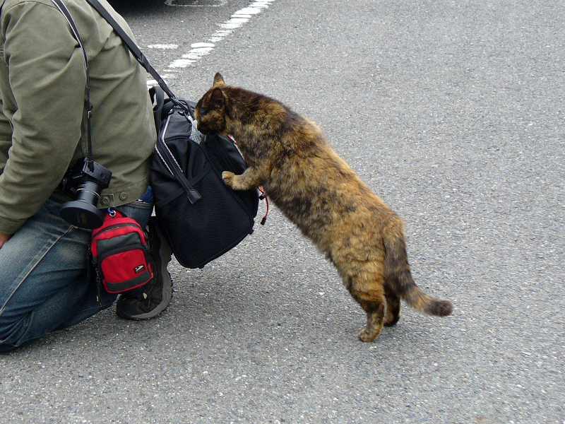 バッグが気になるサビ柄猫3