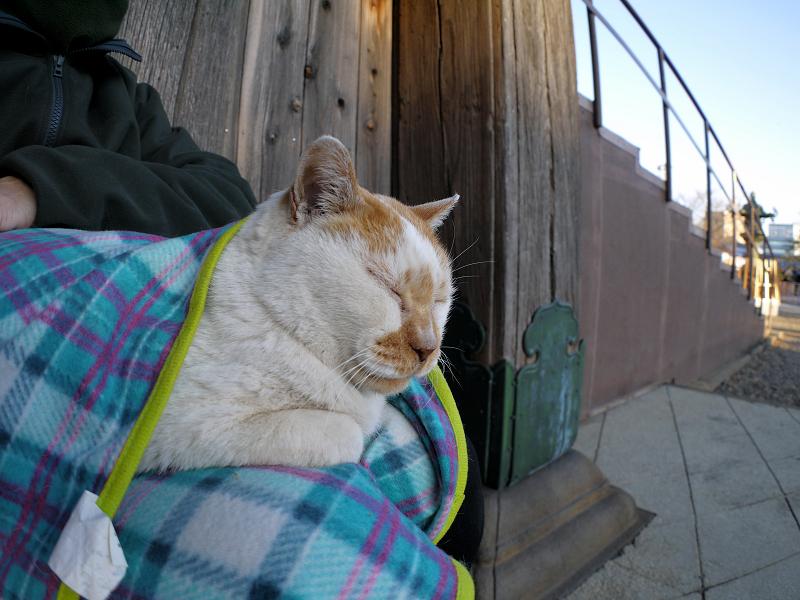 フリースで巻かれた白茶猫2