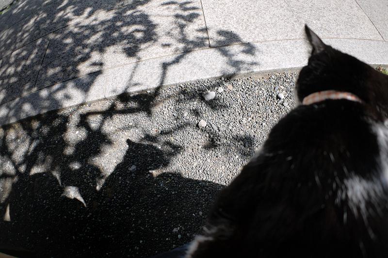 木漏れ日影と黒白猫