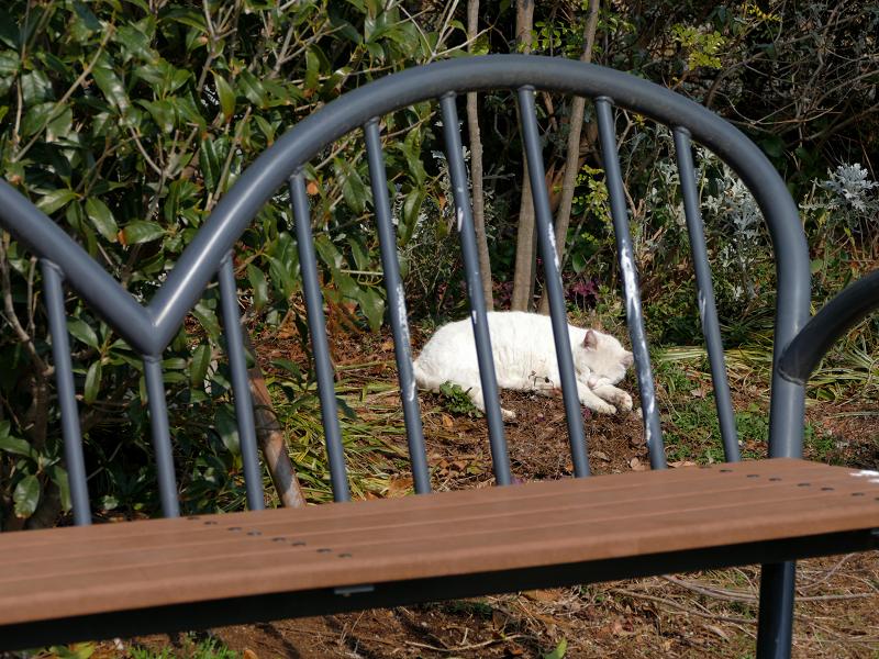 公園の奥で寝てる猫たち3