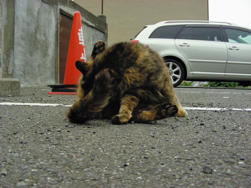 駐車場で毛繕いするサビ柄猫1