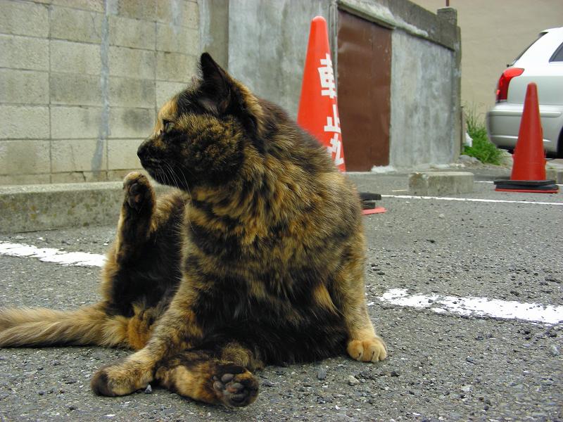 駐車場で毛繕いするサビ柄猫2