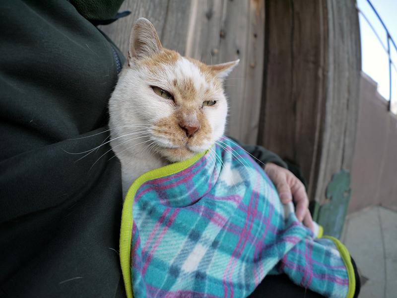 再びフリースで巻かれた茶白猫1