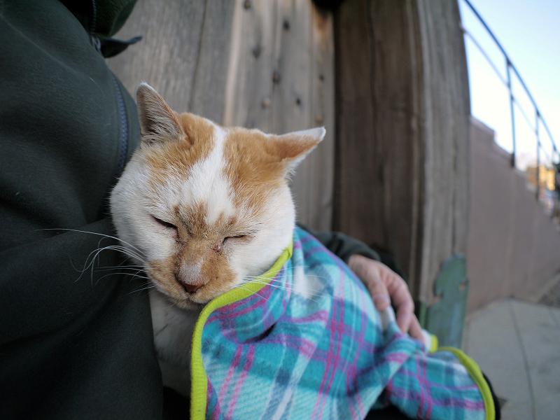再びフリースで巻かれた茶白猫2