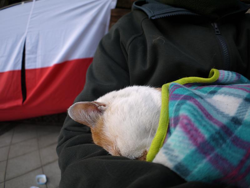再びフリースで巻かれた茶白猫3
