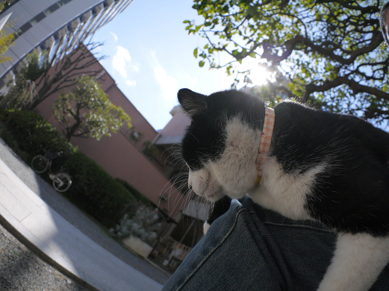 垂れながら目を覚ました黒白猫1