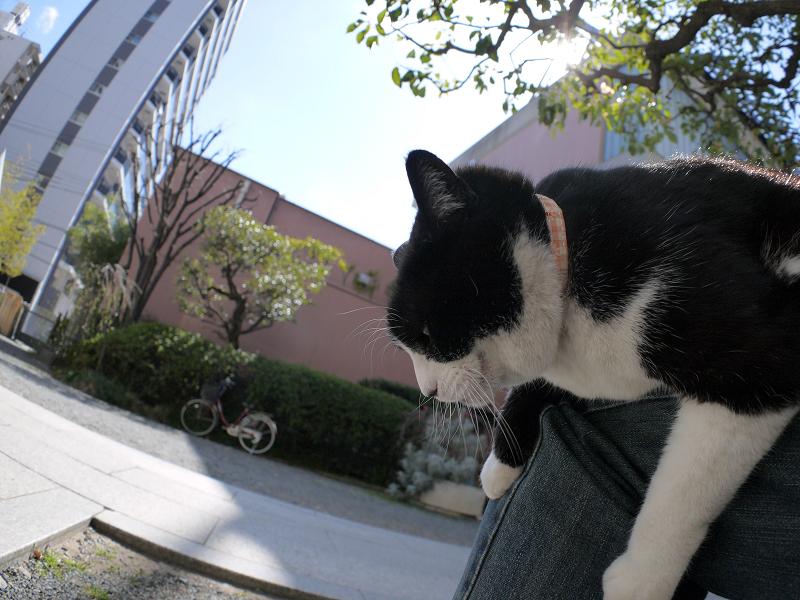 垂れながら目を覚ました黒白猫2