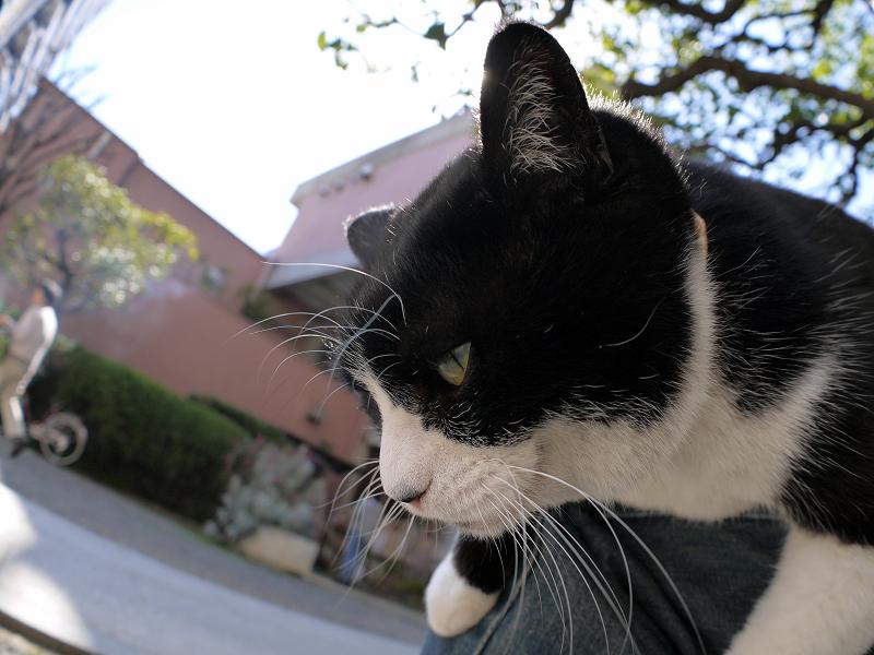 垂れながら目を覚ました黒白猫3