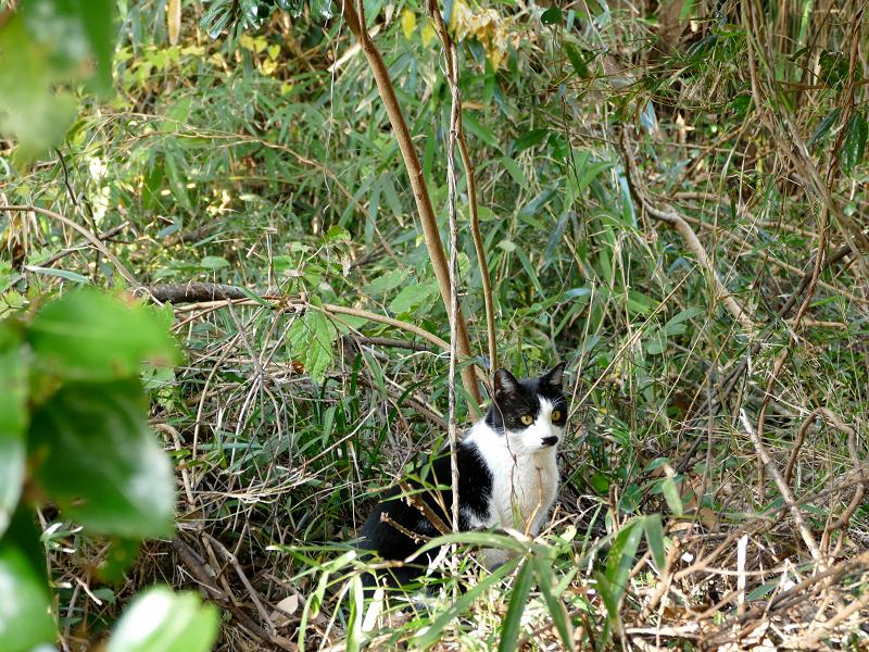 藪と黒白猫