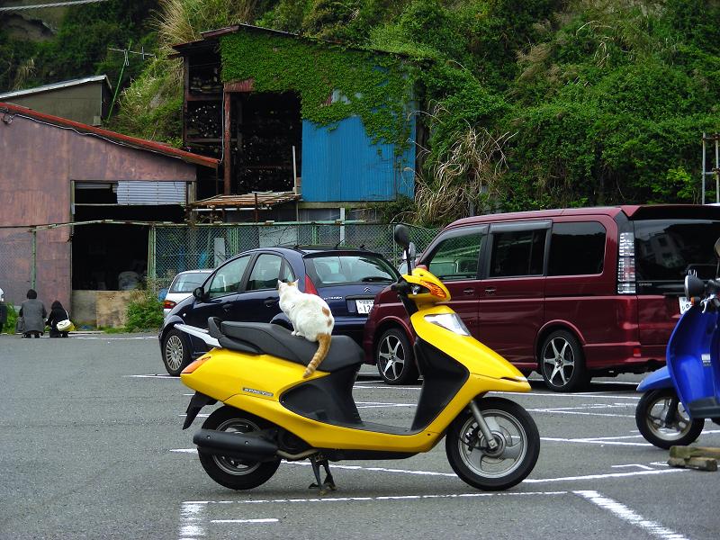 黄色いスクーターと猫