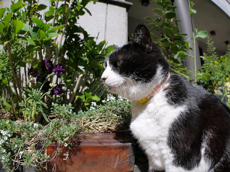 日向でノンビリ黒白猫2