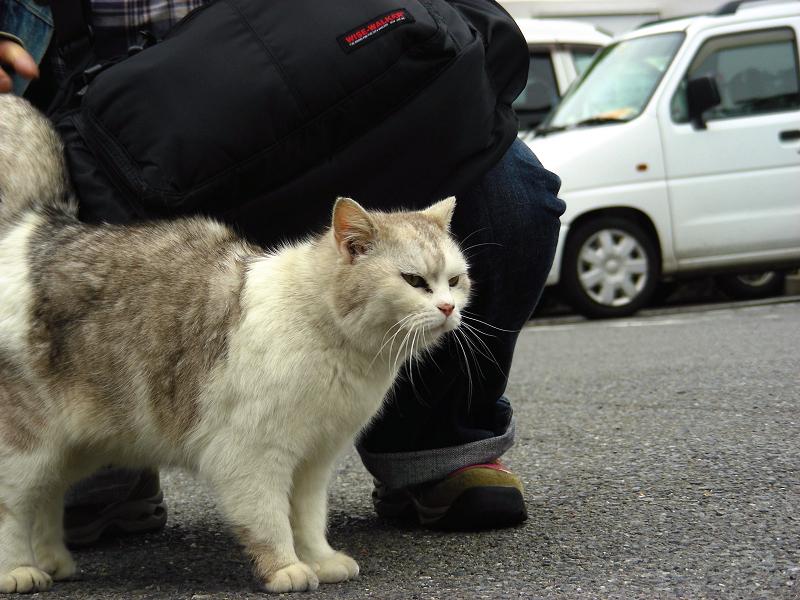 足元の気長の猫2