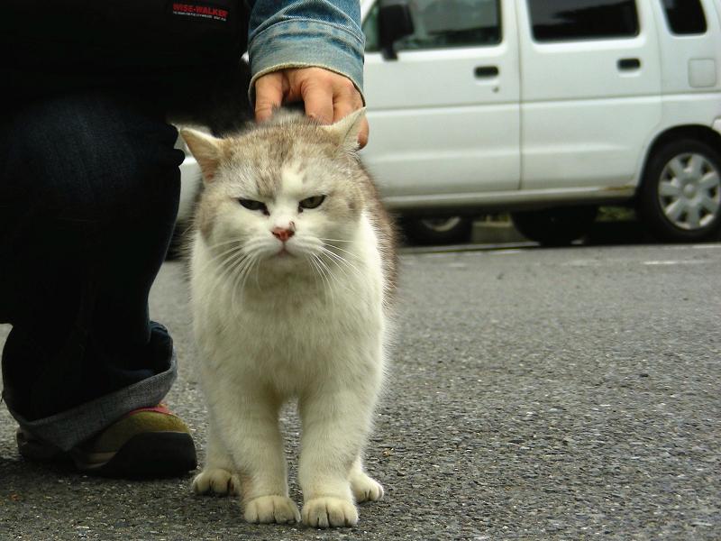足元の気長の猫3