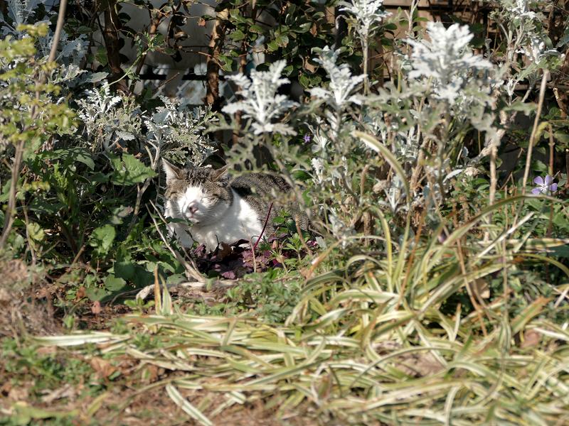 草むらの奥の猫1