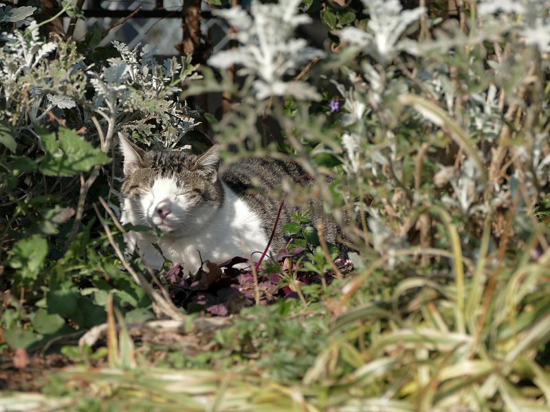 草むらの奥の猫2