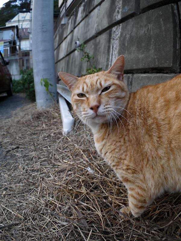 足元の茶トラ猫1