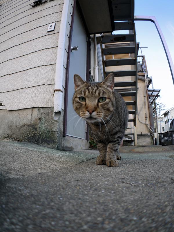 アパートとキジトラ猫1