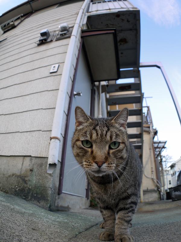 アパートとキジトラ猫2