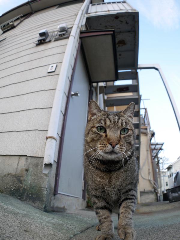 アパートとキジトラ猫3