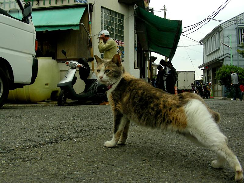 お店まで伸びをする三毛猫1