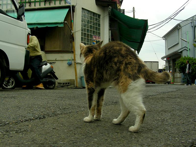 お店まで伸びをする三毛猫2