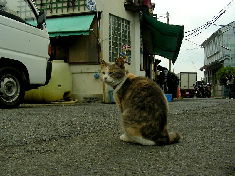 お店まで伸びをする三毛猫3