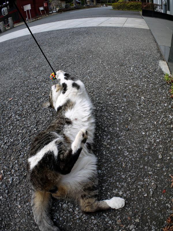 オモチャで遊ぶキジ白猫2