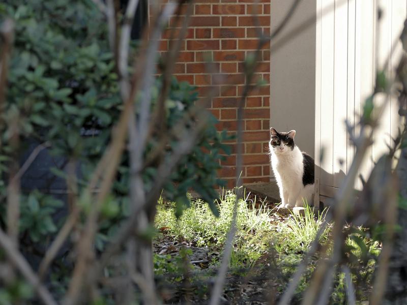 陽だまりの黒白猫1