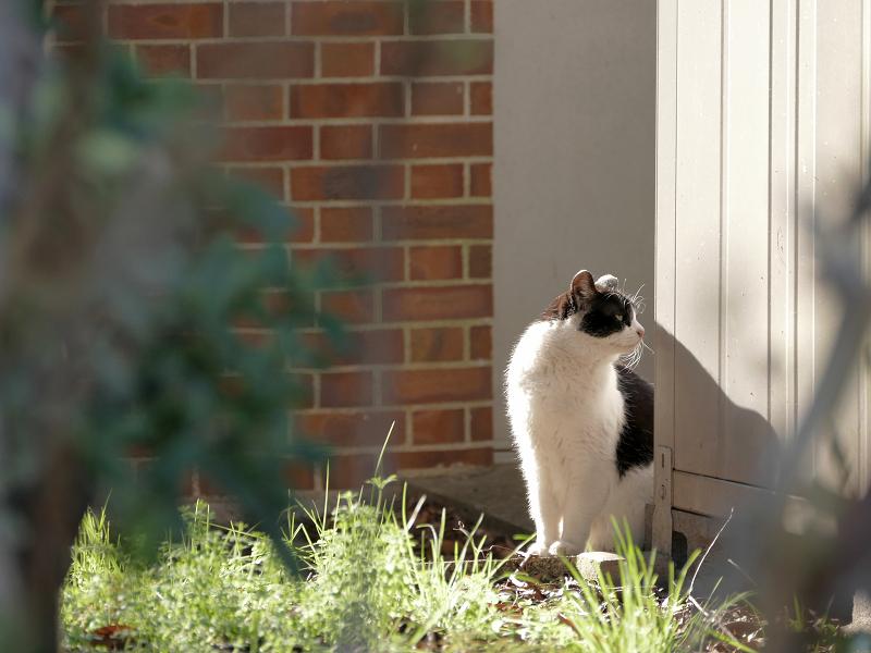 陽だまりの黒白猫2