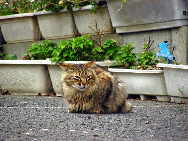 道端にゴージャス猫2