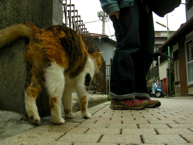 路地の三毛猫1