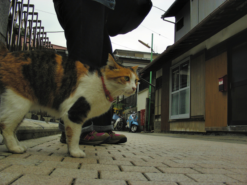路地の三毛猫2