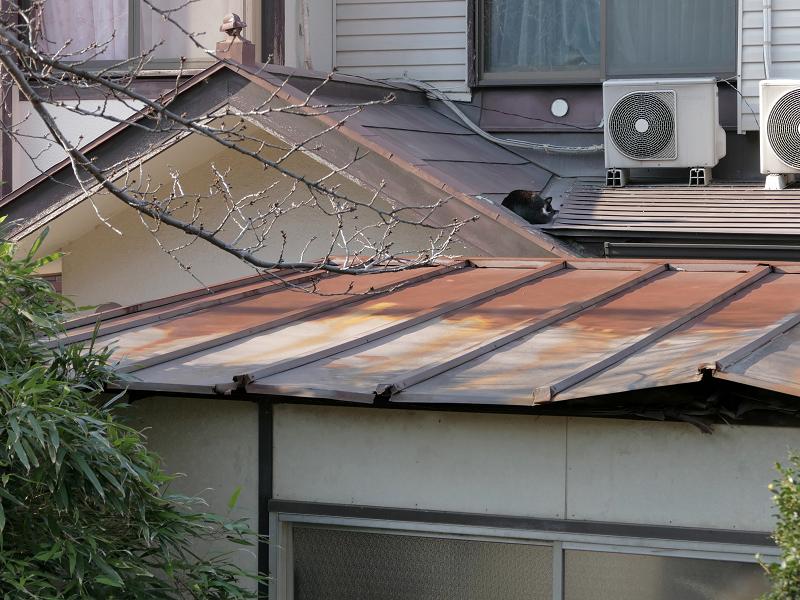 いつまでも屋根で寝ている黒白猫1