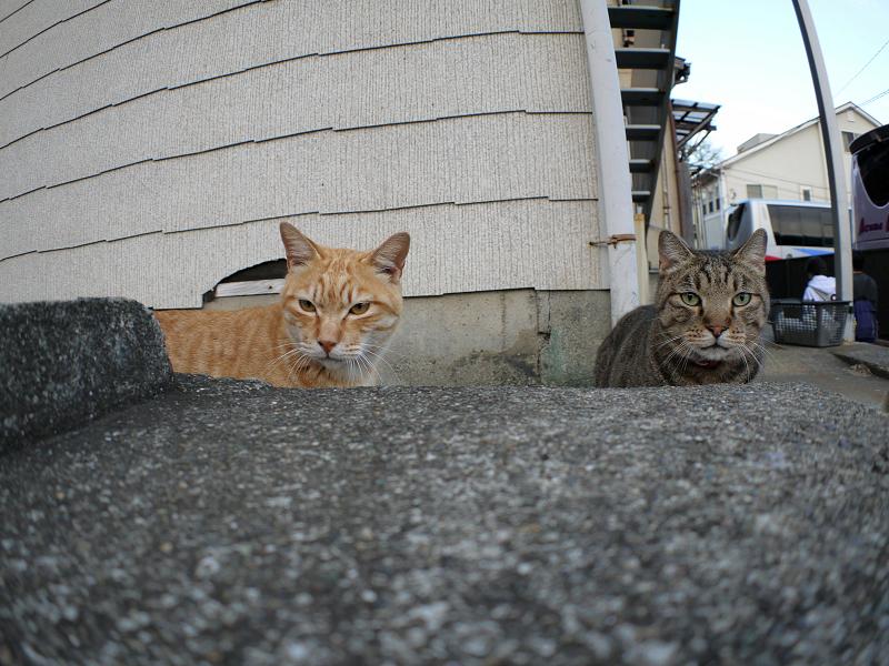 アパート前の猫2匹1