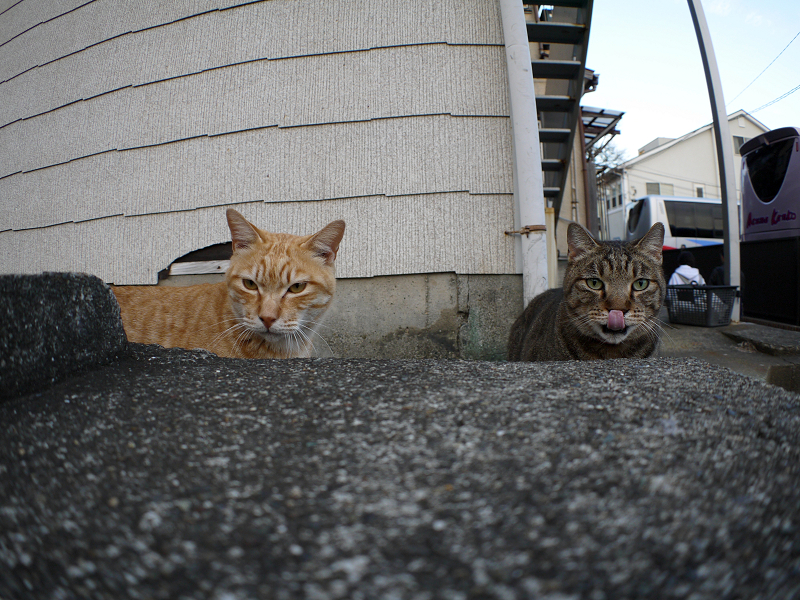 アパート前の猫2匹2