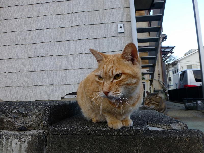 アパート前の猫2匹3