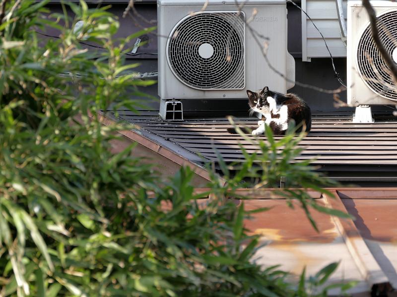 やっと起きた屋根の上の黒白猫1