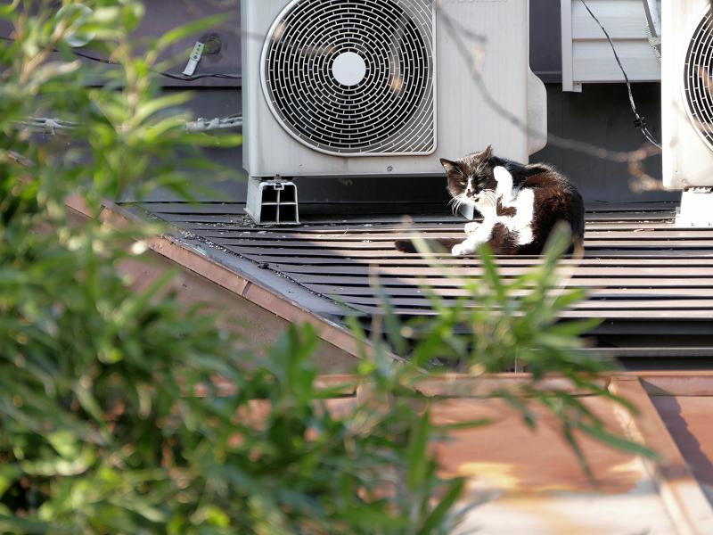 やっと起きた屋根の上の黒白猫2