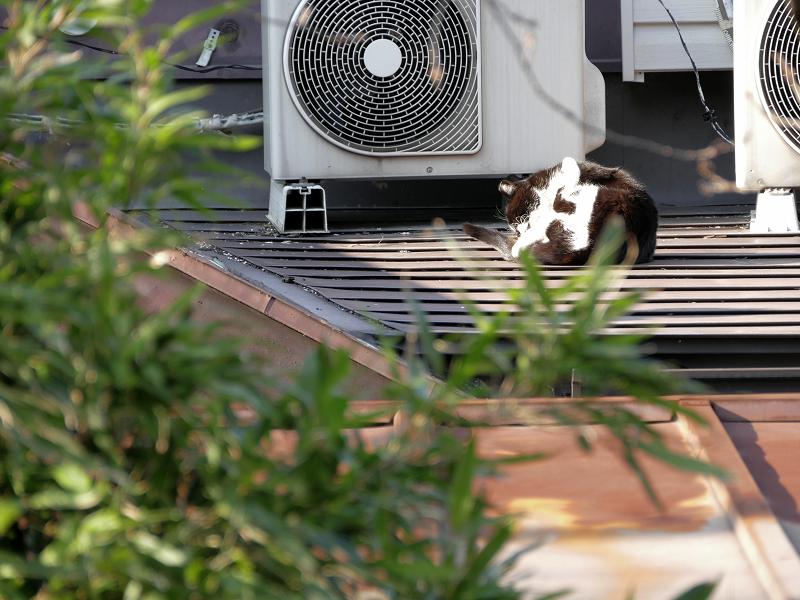 やっと起きた屋根の上の黒白猫3