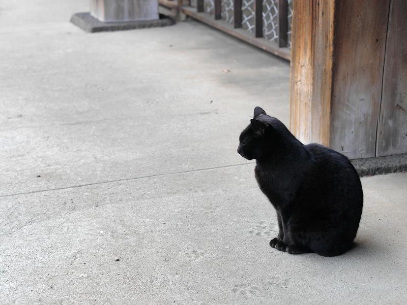 犬走りに黒猫1